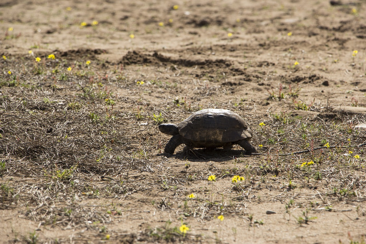 turtle-1309901_1280
